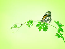 The green creeping plant with butterfly and ladybug on green bac Royalty Free Stock Photos