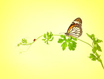 The green creeping plant with butterfly and ladybug on yellow ba Stock Photos