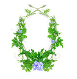 Green creeping plant leaf with blue flower arrangement as frame. The green creeping plant leaf with blue flower arrangement as frame border on white background Stock Photos