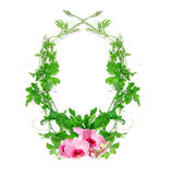 Green creeping plant leaf with pink flower arrangement as frame. The green creeping plant leaf with pink flower arrangement as frame border on white background Stock Photo