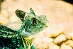 Green Crested Basilisk Reptile Lizard Stock Images