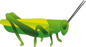 Green Cricket Stock Image
