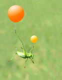 Green cricket and  airballoon Royalty Free Stock Images