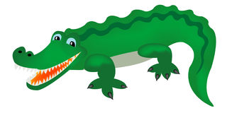 Green crocodile Stock Images