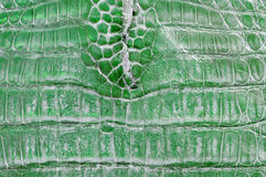 Green crocodile leather Royalty Free Stock Photos