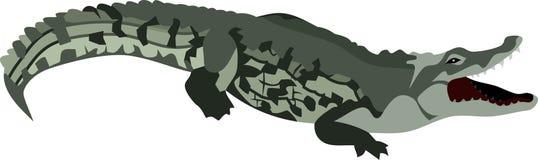 The Crocodile at River. Green crocodile reptile animal wildlife wild vector illustration graphic walk zoo vector illustration