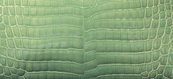 Green Crocodile Skin. Background of green dyed crocodile skin Stock Image