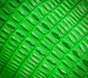 Green crocodile skin texture Stock Images