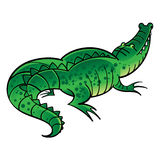 Green crocodile Stock Images
