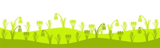 Green crocus spring meadow Stock Photo