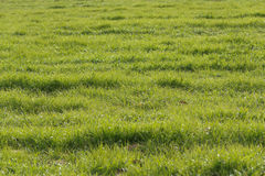 Green crop field Royalty Free Stock Photos