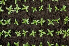 Green crops Royalty Free Stock Photo