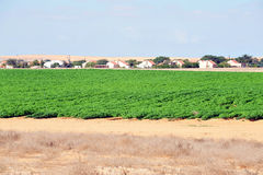 Green crops in the Negev desert Israel Stock Photography
