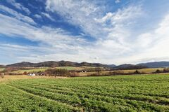 Green Crops Under White Clouds and Blue Sky during Daytime Stock Image