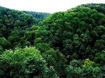 A green crown of deciduous trees in a mountain forest. Green, deciduous trees, mountain forest, summer, day, panorama, view, landscape, ecosystem, leaves, crown Royalty Free Stock Image