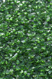 Green Crushed Glass. Ready for recycling Stock Photography