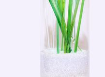 Green Crystal Stems Glass Bits. Green crystal stems in clear vase with glass bits royalty free stock photo