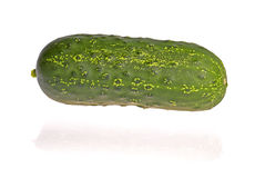 Green cucumber. Fresh green cucumber isolated on white background Stock Photography