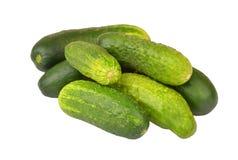Green cucumber gherkin Stock Images