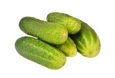 Green cucumber gherkin Stock Photo