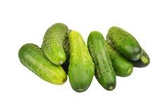 Green cucumber gherkin Stock Image