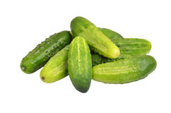 Green cucumber gherkin Royalty Free Stock Images