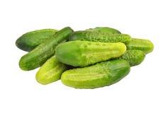 Green cucumber gherkin Stock Photography