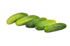 Green cucumber gherkin. Isolated on white background Stock Photography