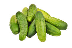 Green cucumber gherkin. Isolated on white background Stock Photos