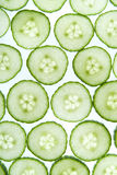 Green cucumber grid Stock Images