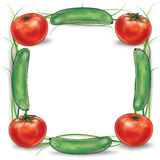 Green cucumber and red tomatoes frame. Vegetable frame created from four green cucumbers and four red tomatoes, still life on a white background. High resolution stock illustration