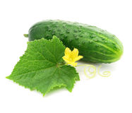 Green cucumber vegetable fruit with leafs isolated Royalty Free Stock Photos