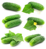 Green cucumber vegetable fruits with leafs Stock Photos