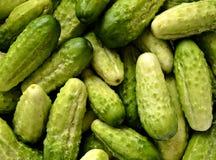 Green cucumbers Stock Image