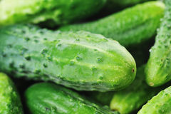 Green cucumbers. Royalty Free Stock Photography