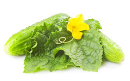Green cucumbers. Heap of fresh green cucumbers with leaf and yellow flowers. Placed on white background. Close-up Royalty Free Stock Photos