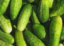 Green cucumbers Royalty Free Stock Photo