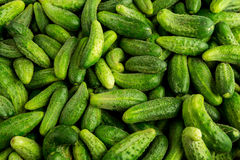 Green cucumbers, background. Green Cucumbers At A Street Market Royalty Free Stock Photography
