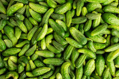 Green cucumbers, background. Green Cucumbers At A Street Market Royalty Free Stock Image