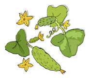 Green cucumbers branch Royalty Free Stock Photo