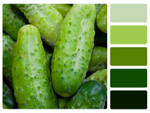 Green cucumbers colour palette swatch Royalty Free Stock Photo