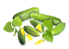 Green cucumbers with leaf and yellow flowers. Heap of fresh green cucumbers with leaf and yellow flowers. Placed on white background. Close-up. Studio Stock Photography
