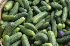 Green cucumbers lie in a box for sale in the market window. Russia. royalty free stock images