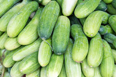 Green cucumbers. Pile of fresh green cucumbers Stock Images
