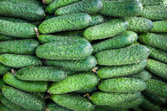 Green cucumbers. Pile of fresh green cucumbers background Royalty Free Stock Image