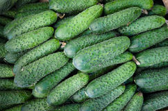 Green cucumbers. Pile of fresh green cucumbers background Stock Images