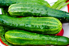 Green cucumbers Stock Photography