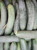 Green cucumbers on sale at the market Stock Image