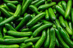 Green cucumbers. Stack of fresh green delicious cucumbers Stock Images