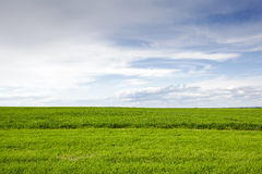 The green cultivated field and sky Royalty Free Stock Image